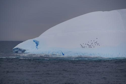 091 IJsberg met Pinguïns