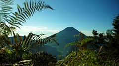 Mt. Sumbing from Sikunir Hill
