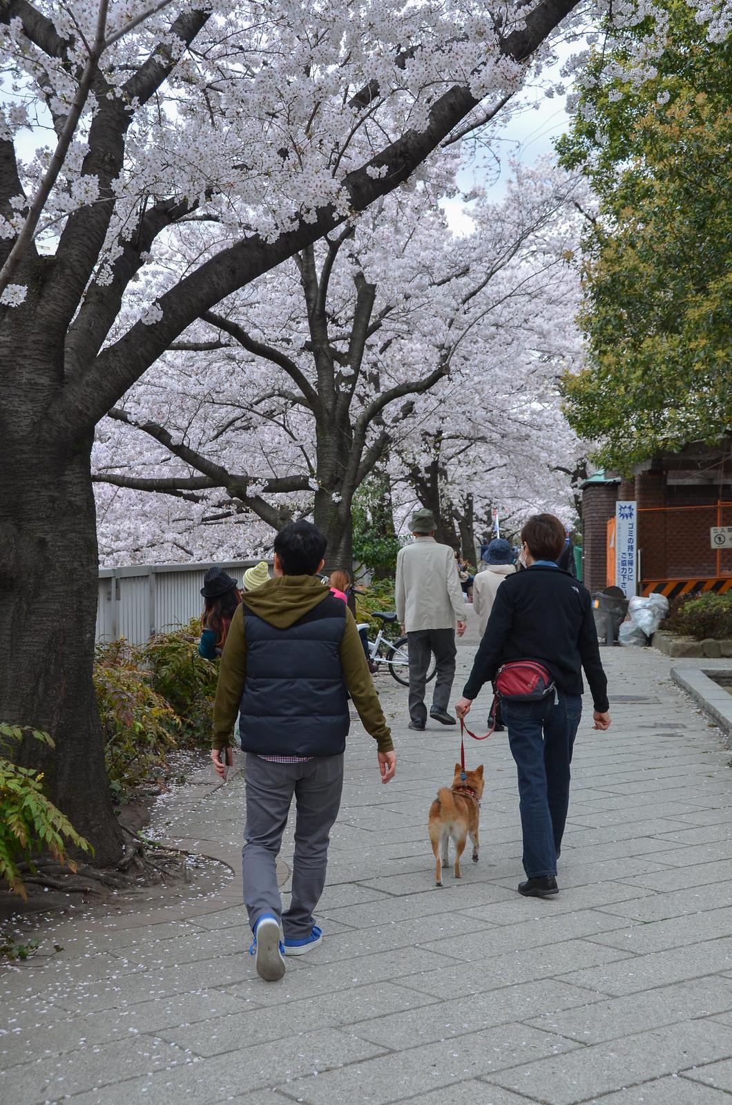 04.03.2014_kandagawa-41