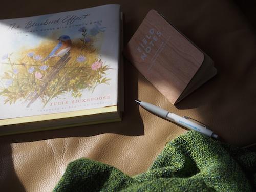 read, write, sun