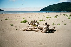 San Josef Bay in Cape Scott Provincial Park - 1 (of 12) - Contax T2 Compact with Carl Zeiss 1:2.8 f=38 mm T* and Fuji ISO 200 Superia Film