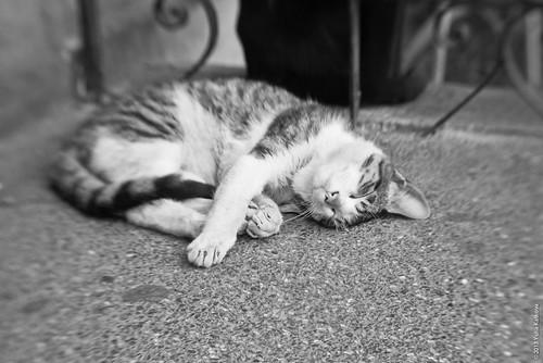 Gatos del Parque Kennedy