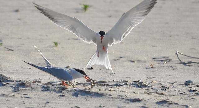 Terns and a beautiful landing