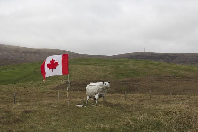 Canadian Faux Sheep