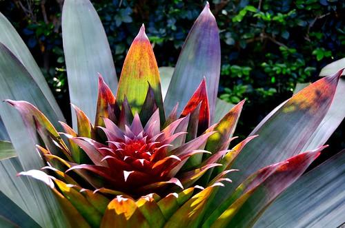 Backlit Bromeliad