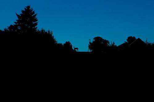 morning silhouette deer fujixe1