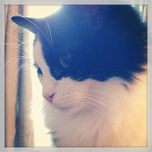 #fmsphotoaday September 17 - In front of me. #catsofinstagram