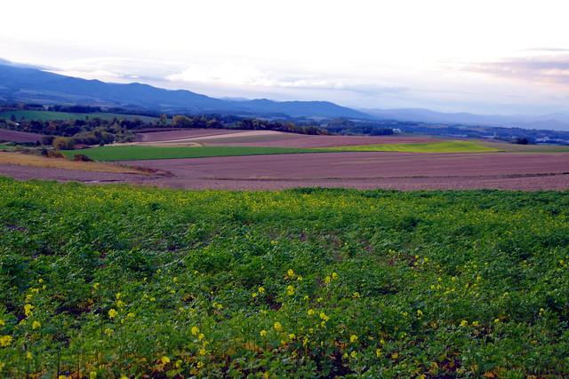 キガラシの丘1