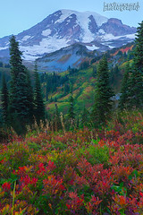 Mt Rainier In Autumn