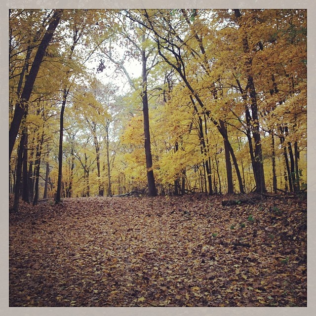 More fall colors. #ridinggravel #fall