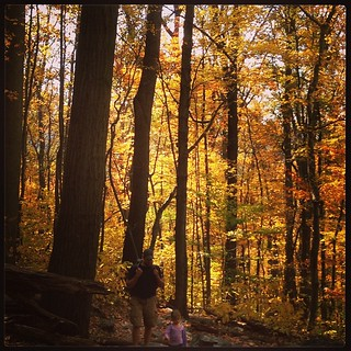 Autumn on the  Appalachian  Trail #maryland