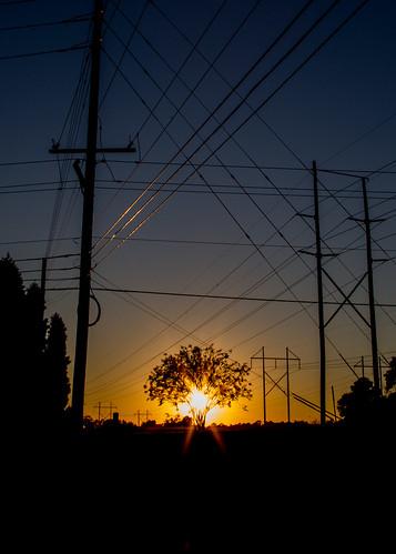 sunset landscape zoo unitedstates southcarolina columbia westcolumbia riverbankszooandgarden