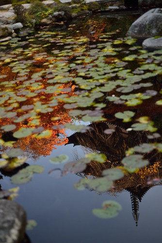 The autumn reflected in the water surface @Taima-dera temple.