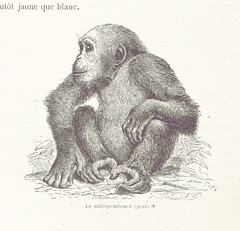 Image taken from page 376 of 'Voyages et aventures dans l'Afrique équatoriale ... Édition Française, revue et augmentée'