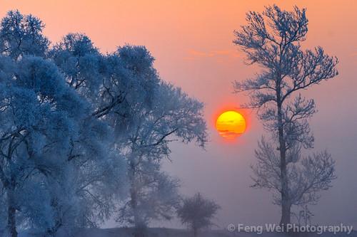 china morning travel winter snow cold color tree tourism beautiful beauty horizontal sunrise season landscape dawn twilight scenery colorful asia view outdoor scenic vista chilly desolate jilin songhuariver wusong wusongisland wusongdao