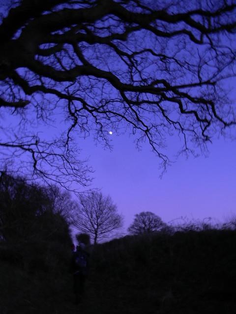Dusk scene with moon