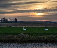 2014 01 18 Opmeer Sundown