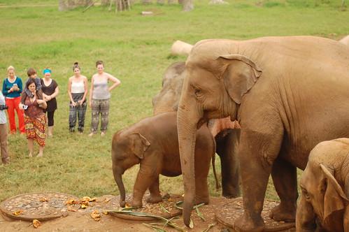 Elephant Nature Park 9