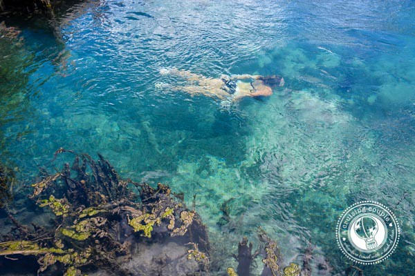 The Cenote of Youth - 5 Reasons You Absolutely Must Visit Isla Holbox