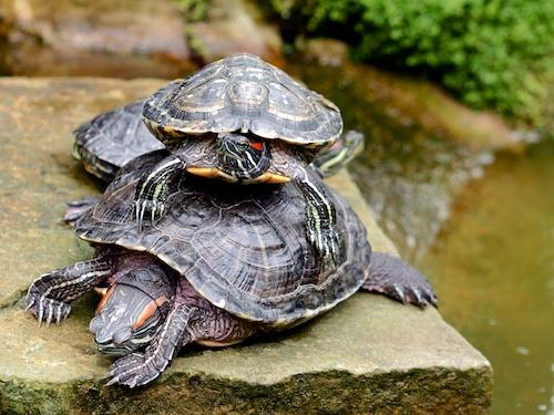 turtle cuddling