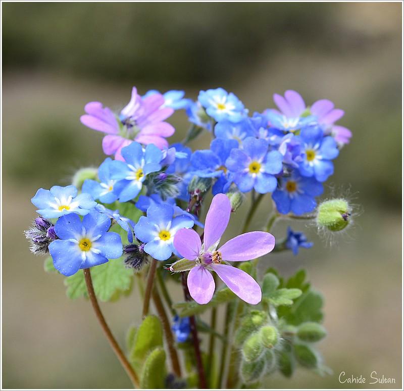 kır çiçekleri2
