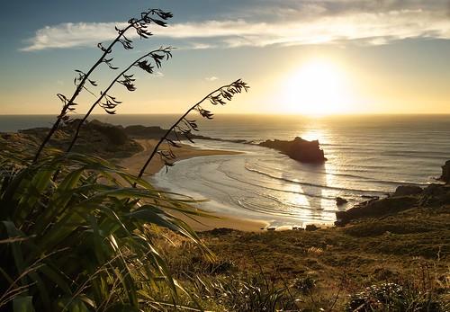 sea newzealand lighthouse sunrise northisland reef castlepoint wairarapa phormiumtenax nzflax