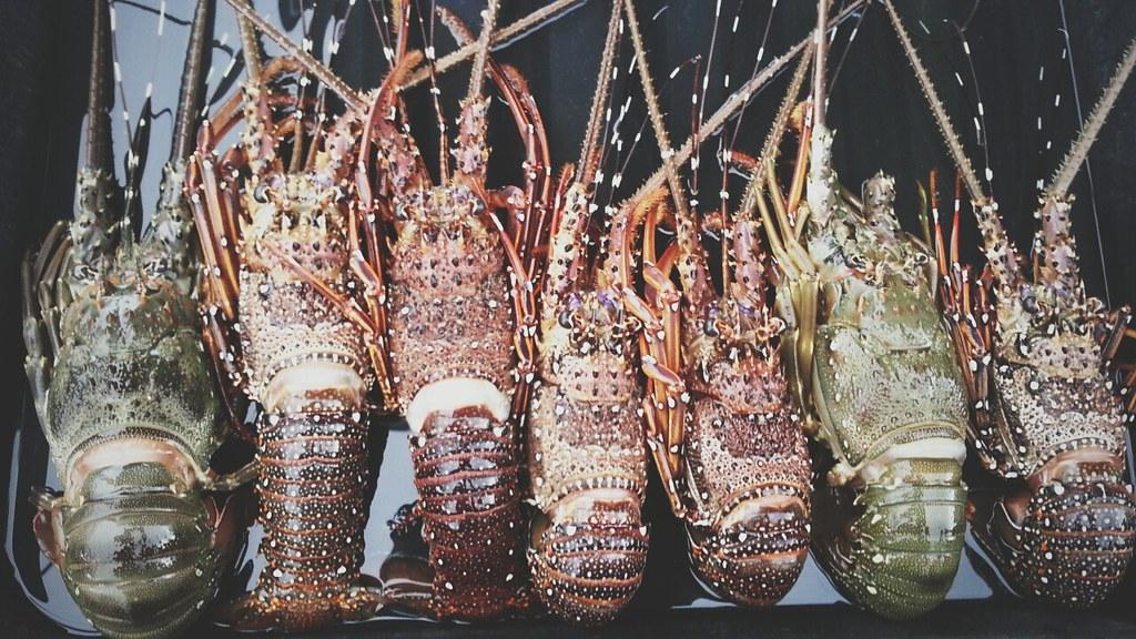 Sabah Lobster