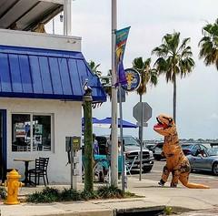 Dinosaur sighting in Gulfport today. #GulfPortFL #getGulfported #keepgulfportwierd
