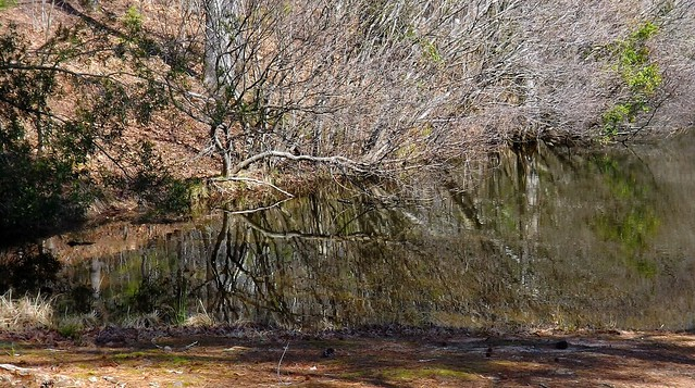 Reflections of Winter, Fujifilm FinePix S4080