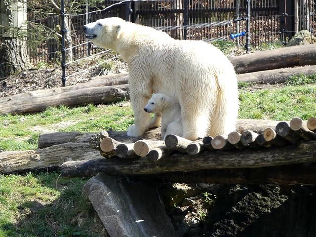 Sesi und Nanuq, Zoo Mulhouse