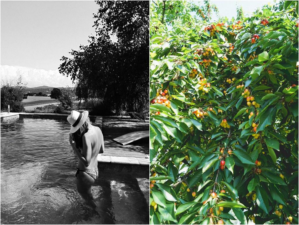 cherry tree and me