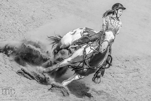 Gooseberry Lake : 4-H Rodeo 2013 : Sidewinder