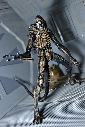 Xenomorph Warrior Alien