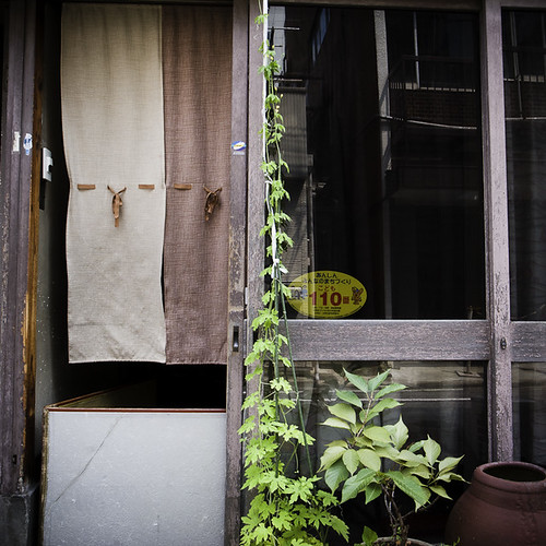 Noren (Curtain), VIne, Terracotta Pot, Asakusabashi