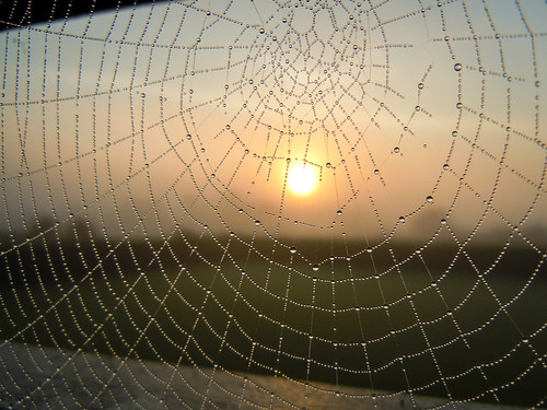 sunrise spider web explore dew explored