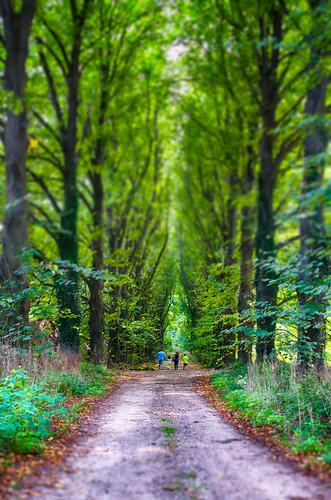 trees people landscape woods mystical fairyland hdr