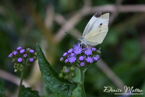 294: Butterfly