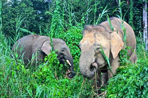 elephant dinner on the river