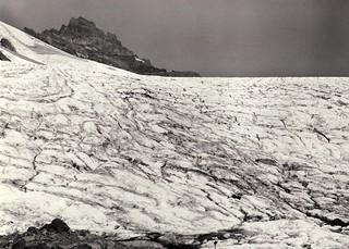 Paradise_Glacier_1936