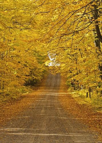 road autumn ontario colour nature leaves yellow landscape hill scenic fallen dirtroad canopy gravelroad fallcolours iline stjosephisland stjosephtownship