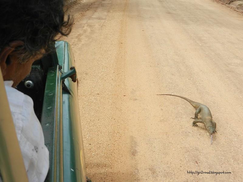Шри Ланка. Дороги. Ялла