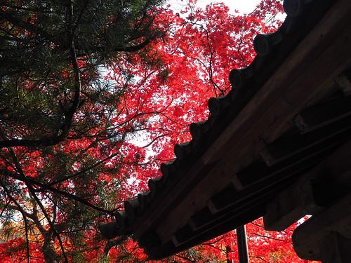 西明寺 表門 紅葉