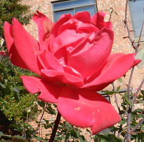 today flowersDSCN5537