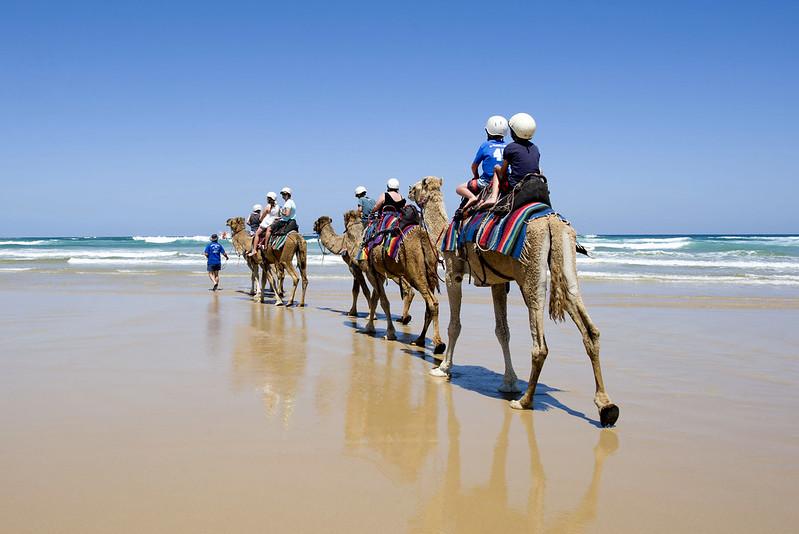Camel rides at Port Stephens