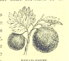 Image taken from page 37 of 'Captain Cook: his life, voyages, and discoveries. [With illustrations.]'
