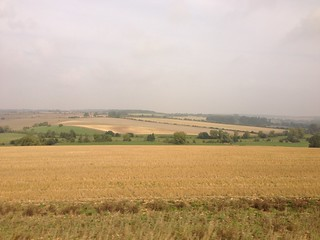 Fields of Gold (Cotswolds)