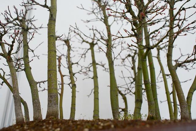 Forêt d'arbres en bonsai