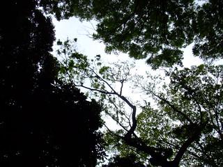 2008_0504_Musashino0006