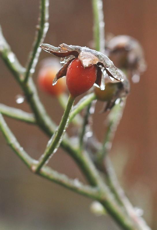 ❄ frost bite ❄ 4/13