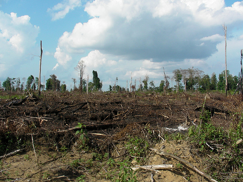 數據造假遭爆 印尼森林消失速度世界最快